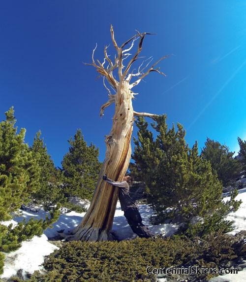 Ian Fohrman-- writer/photographer, freeskier, tree hugger. ian fohrman